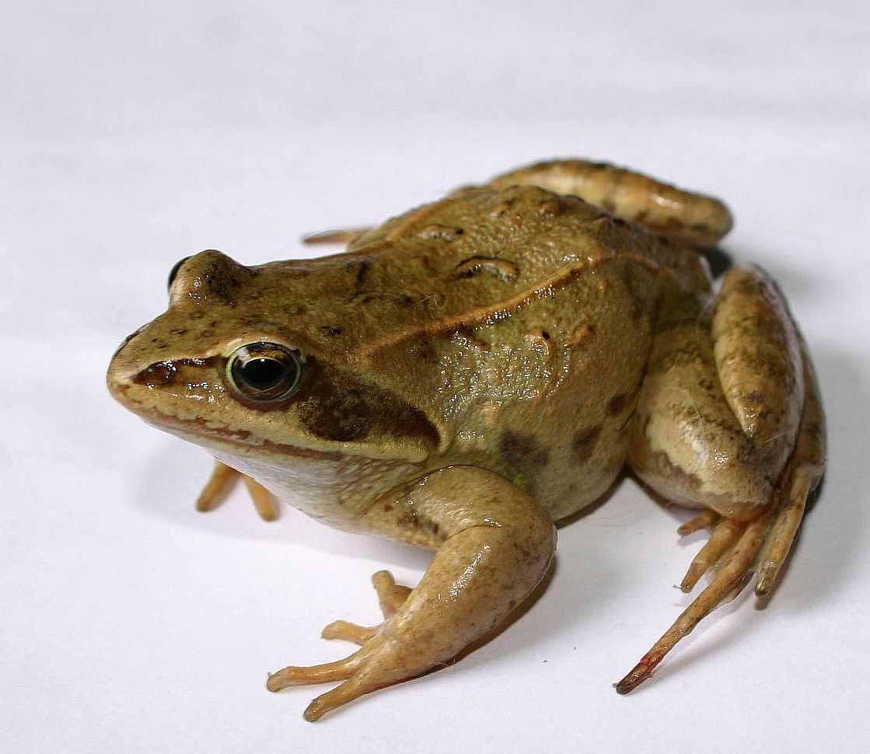 приколы про жабы